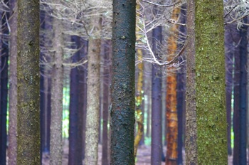森林公園2.jpg